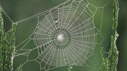spider-web-hd-1
