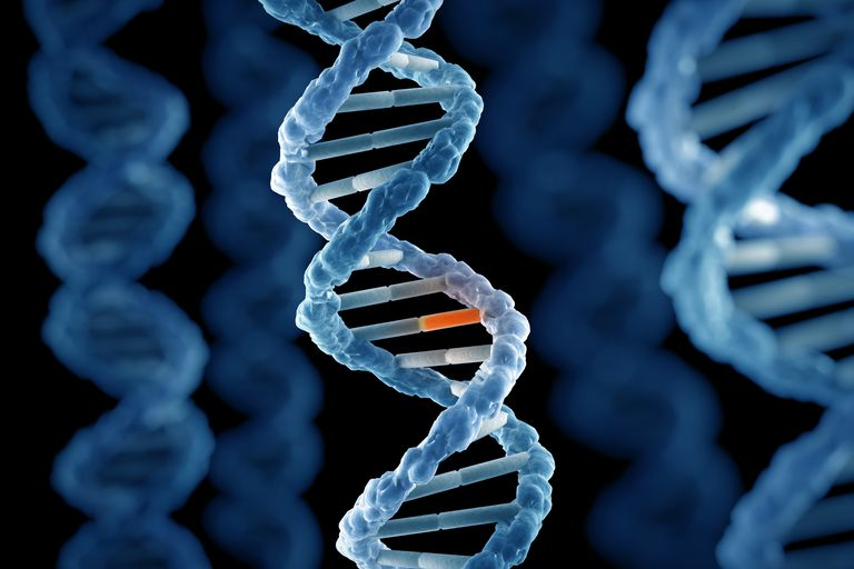 dna-structure-562597795-5ae77532c06471003681d684
